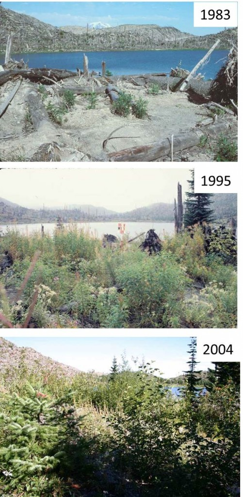 Time series of early succession in the Mt. St. Helens blast zone. Credit: USDA Forest Service, Mt. St. Helens National Volcanic Monument