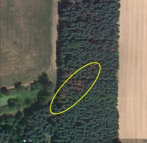 A pocket of dead trees in a low-lying area suggests possible root disease (2010 photo from Google Earth).