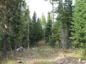 High elevation mixed conifer forest