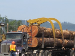 big logs coming into a mill