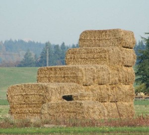 Stack of straw bales in grass seed field (T.G. Chastain photo)