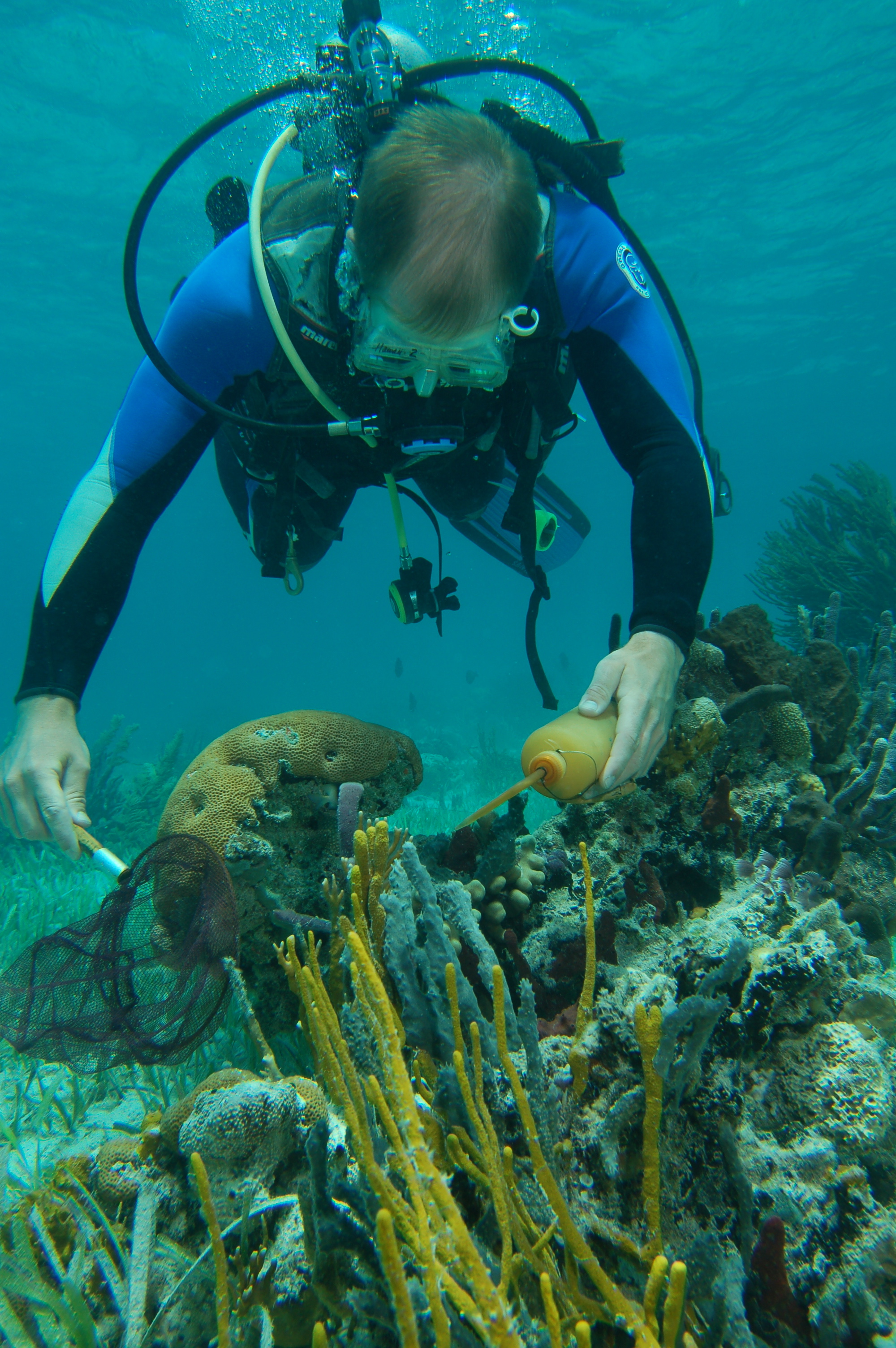 In waters off the Bahama in 2006, Mark Hixon collected juvenile coral-reef fish for tagging. (Photo courtesy of mark Hixon)