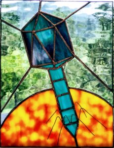 Stained glass HS1 bacteriophage