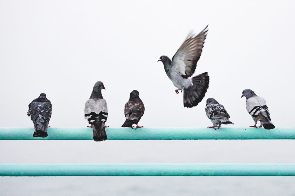 image of several birds sitting and one is moved to fly