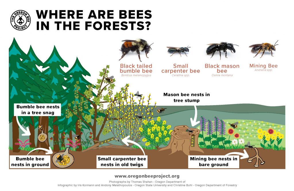 This image has an empty alt attribute; its file name is Forest-bees-postcard_Page_2-1024x665.jpg