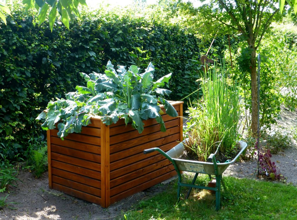raised garden bed with leafy vegetables, a wheel barrel alongside the raised bed. The wheel barrel is filled with plants.