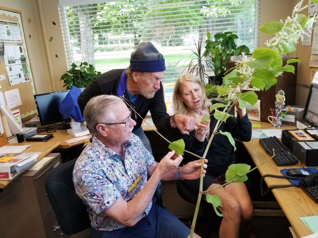 2 Master Gardeners sitting in Master Gardener helpline clinic, look at a large branch with leaves, as a client leans over and points at the branch.