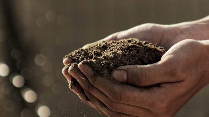 Cupped hands holding soil.