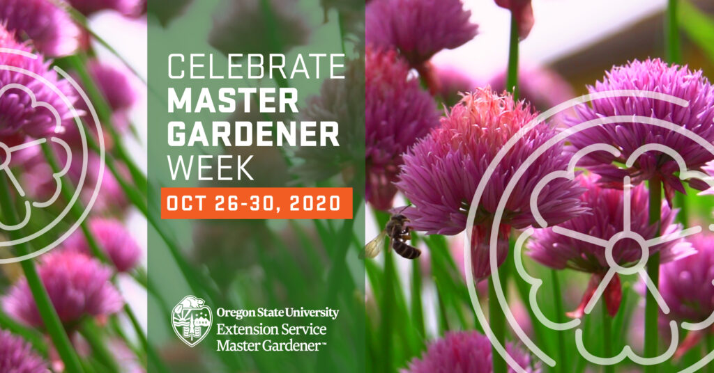Image of clover blossoms, with bees. Overlaid with 'Celebrate Master Gardener WEEK' 'Oct 26 - 30, 2020'
