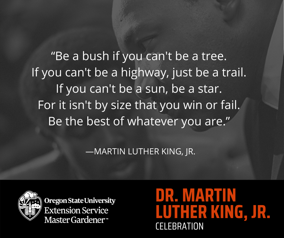 """Dr. Martin Luther King Jr. with overlaid quote """"Be a bush if you can't be a tree. If you can't be a highway, just be a trail. If you can't be a sun, be a star. For it isn't by size that you win or fail. Be the best of whatever you are."""""""