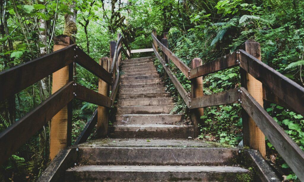 Long stairway ascending through natural greenway.