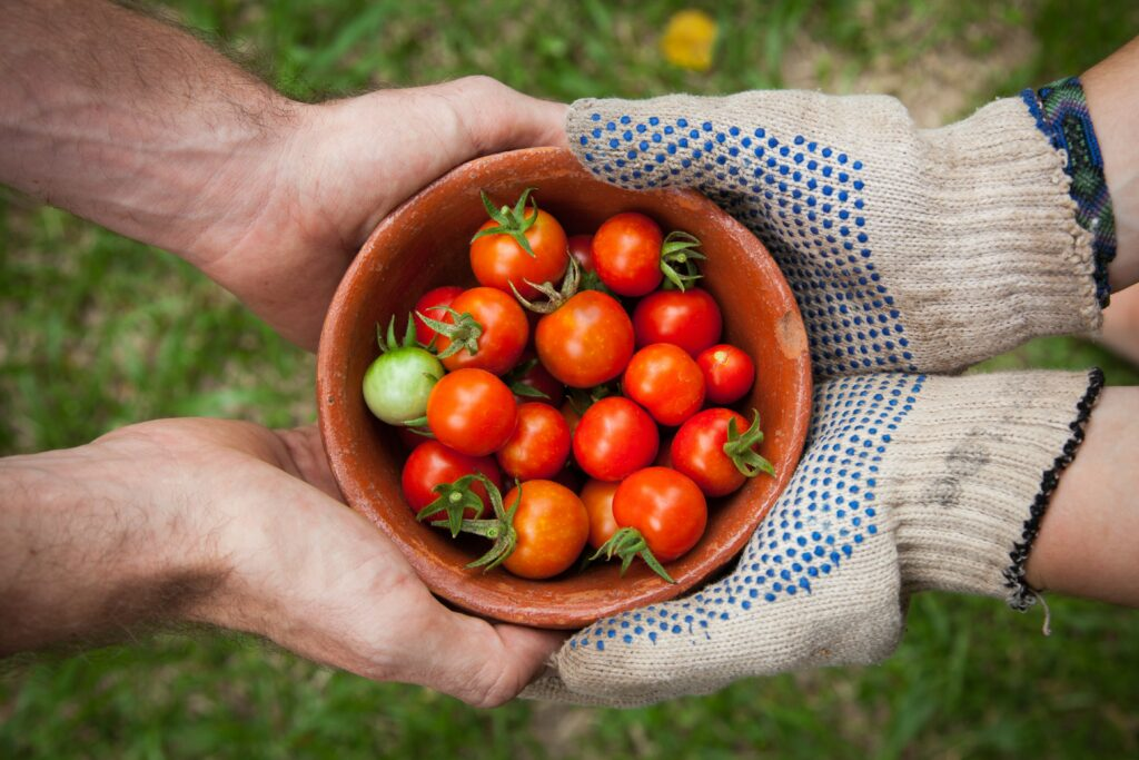 Two sets of hands holding together a terracotto bowl of red cherry tomatoes.  On set of hands is bare, the other set of hands is wearing garden gloves.