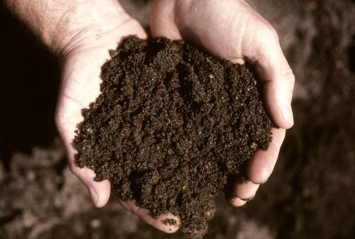 Handful of soil.