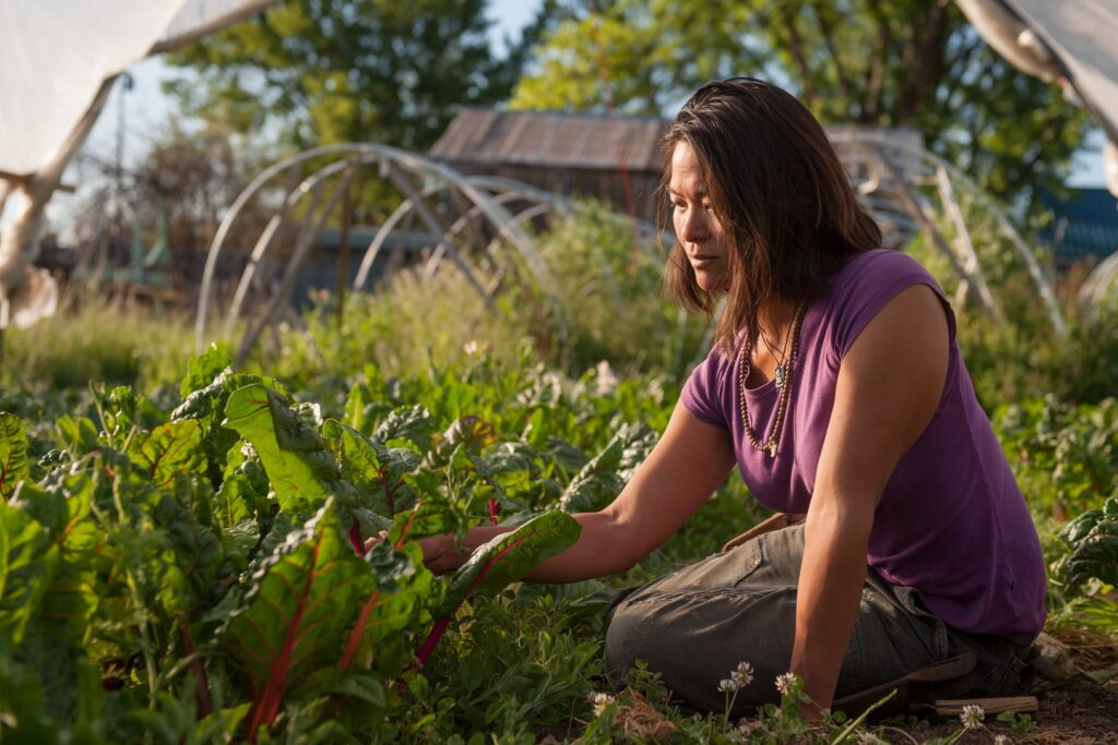 Woman on her knees, harvesting in a vegetable garden.
