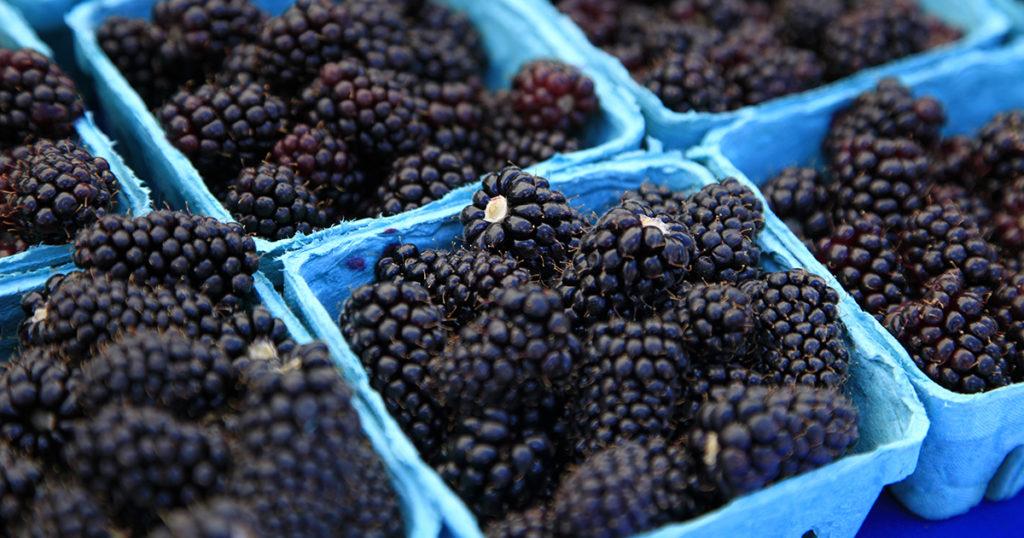 blackberries at Corvallis, OR farmers market