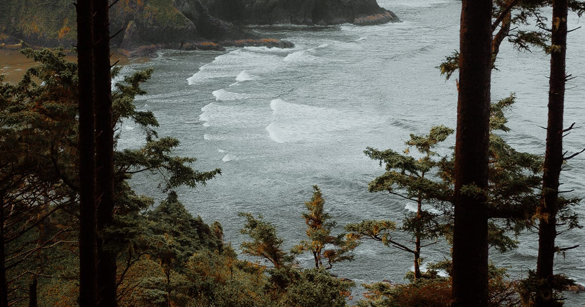 View of Oregon coast through nearby forest