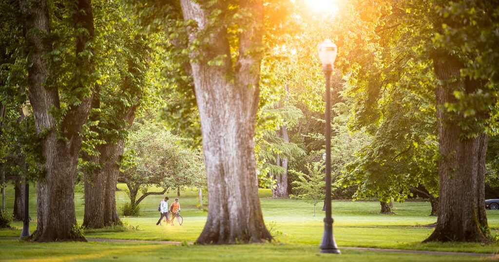 sunlight comes through trees on Oregon State University's Corvaliis campus