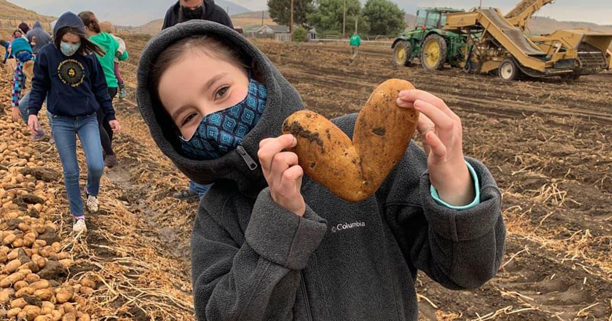 Young girl holds a potato shaped like a heart