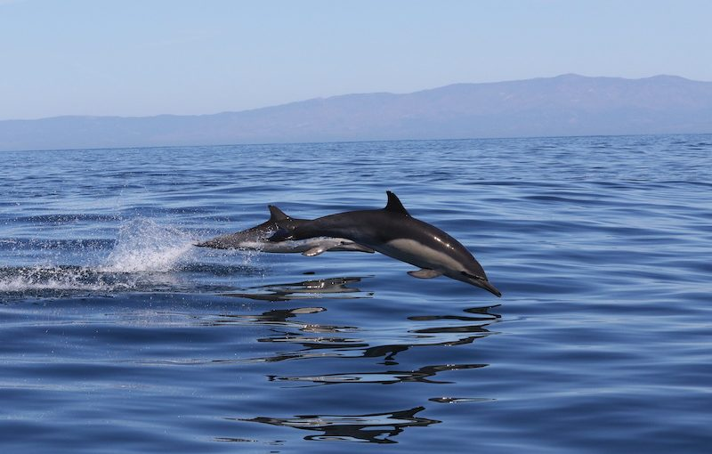 Measuring dolphin response to Navy sonar