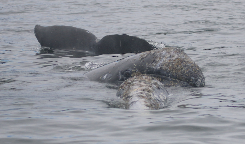 Love thy mother: maternal care in cetaceans