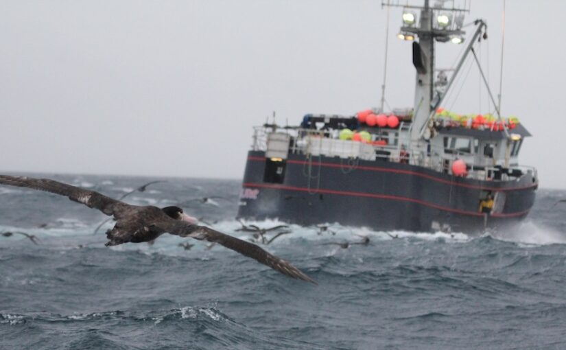 Drivers of close encounters between albatross and fishing vessels