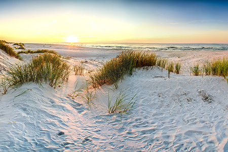 Recipe for a dune: Sand, wind, water, plants