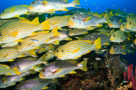 Marine ecologists devise handbook to accelerate global ocean protection