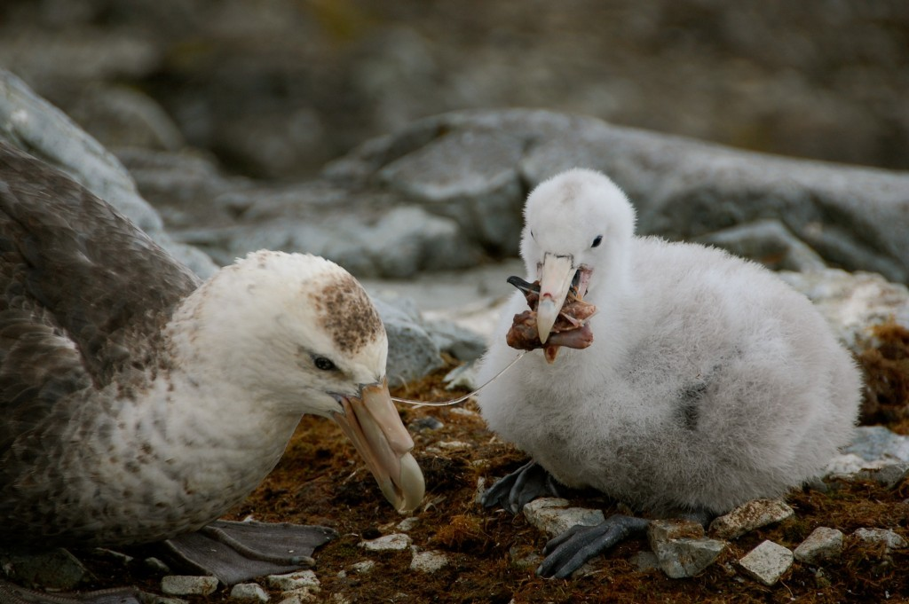 seabirds Archives - All about that baseline: