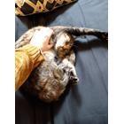 A photograph of Dessa the cat