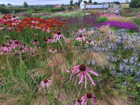 Pollinator friendly flowers