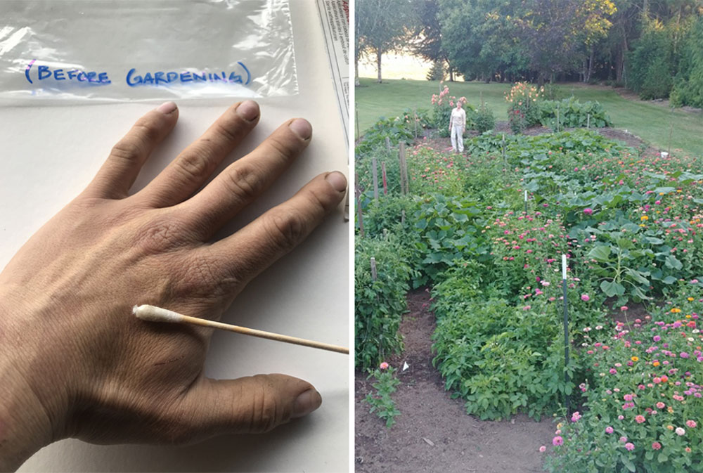 Volunteers collected samples from their garden soil and hand surface microbiome.