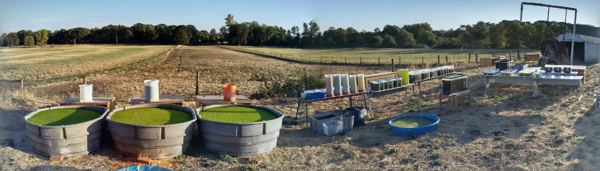 Outdoor algal growth studies @STL