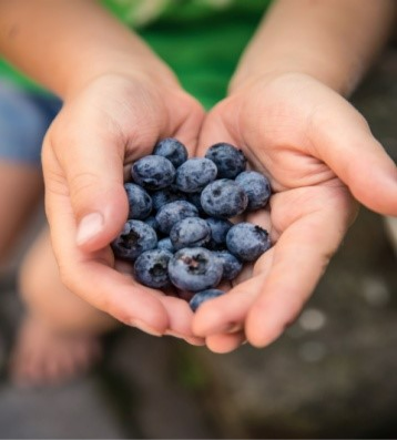 Hands holding blueberry fruit