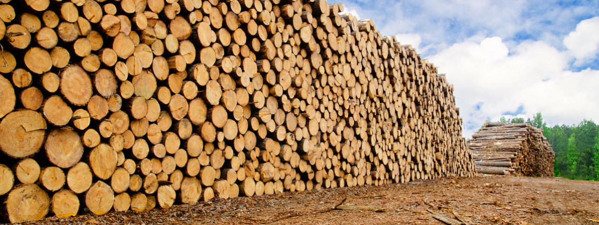 Fresh Timber from the Lumber Quality Institute