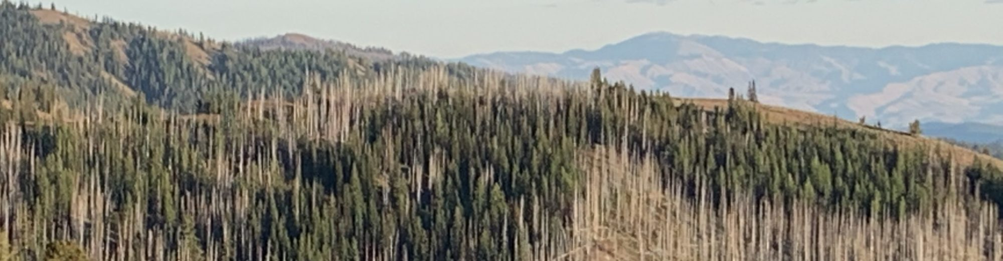 Reducing Wildfire Risk in Northeastern Oregon