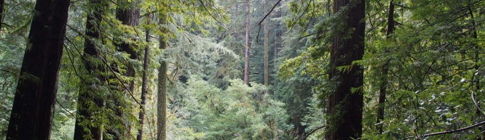 Maintaining a Healthy Forest in an Uncertain Climate