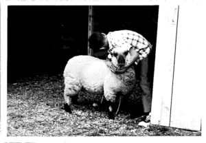 Unknown child with his market lamb at the Grant County Fair circa 1950s.