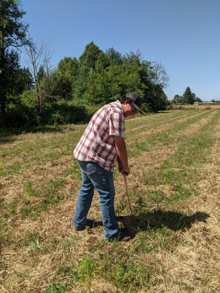 Henry Golb uses a a soil probe to pull some soil samples at a local small farm.