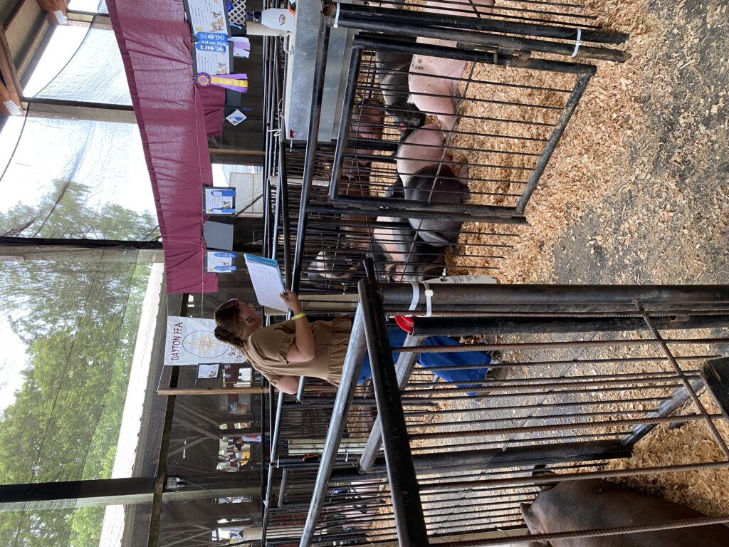 Judging at the Yamhill County Fair.