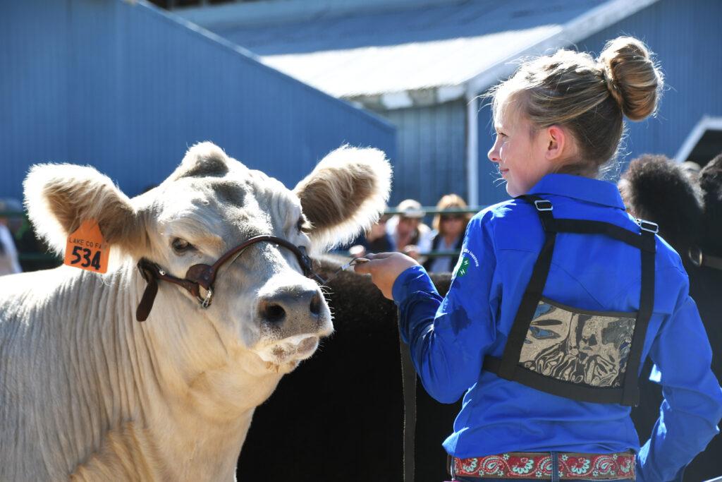 Showmanship at the Lake County Fair. Photo by Alyson Yates.