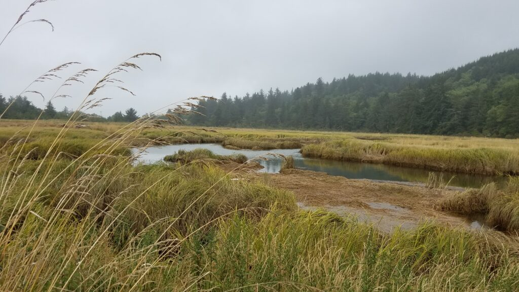 Bott's Marsh is a restoration project managed by the Lower Nehalem Community Trust. Photo by Chloe Hull
