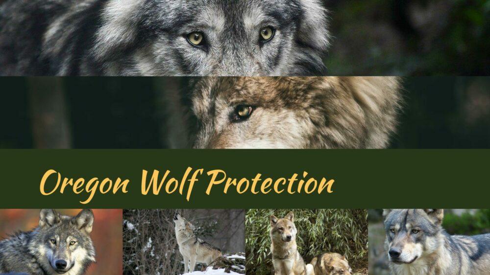 Oregon Wolf Protection