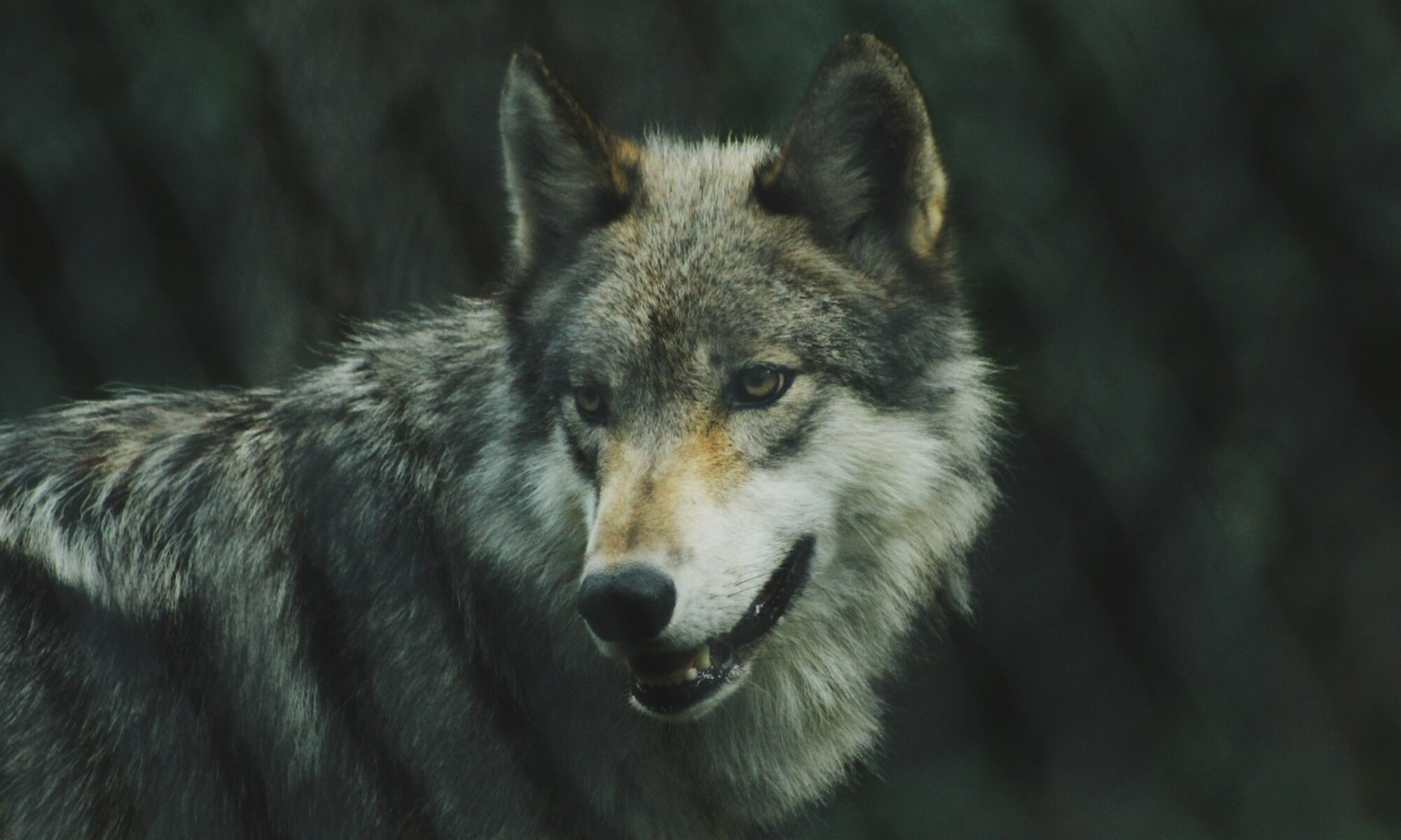 FW 350: Wolves in Oregon