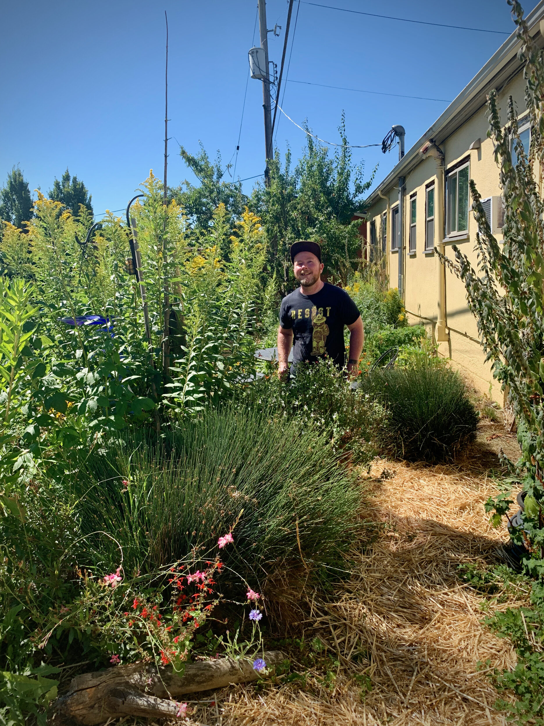 Athen standing with giant goldenrod and salvia plants in backyard community garden