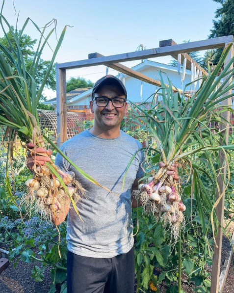 man in garden holding two giant bunches of freshly harvested garlic