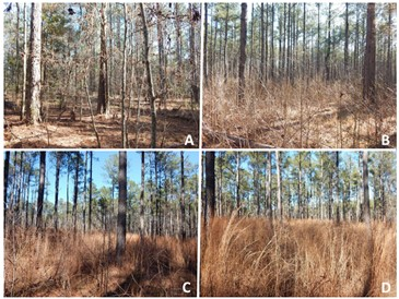 Figure 5. Structural characteristics of a southern pine forest from different intervals of prescribed burning: (A) control–no burn, (B) prescribed burn on a three-year interval, (C) prescribed burn on a two-year interval, and (D) prescribed burn on a one-year interval.