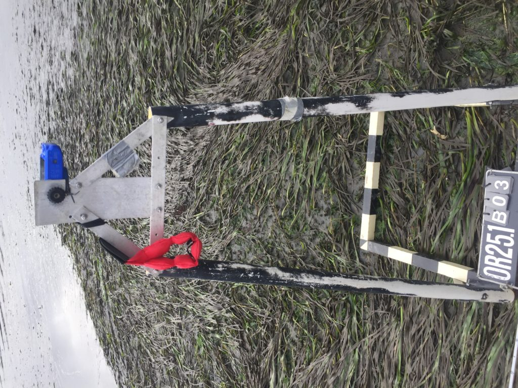 Equipment used for estimating population and health of eelgrass.