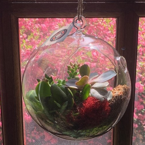 Succulent planter globe hanging in a window.